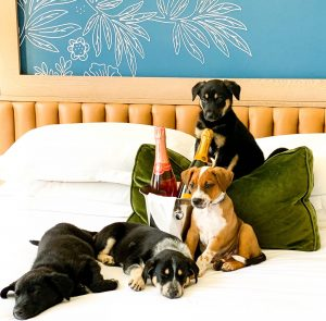 Puppies and Prosecco at Kimpton Monaco Hotel in Denver