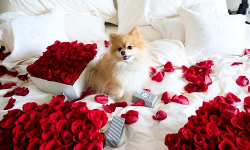 Love is in the air: These hotels turn up the romance quotient for Valentine's Day to the max